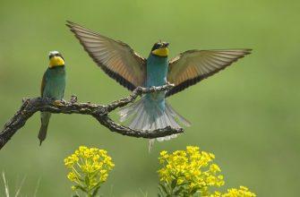 pticy para krylya vzmah vetka cvety 55885 1280x720 335x220 - Практическая черная магия обучение